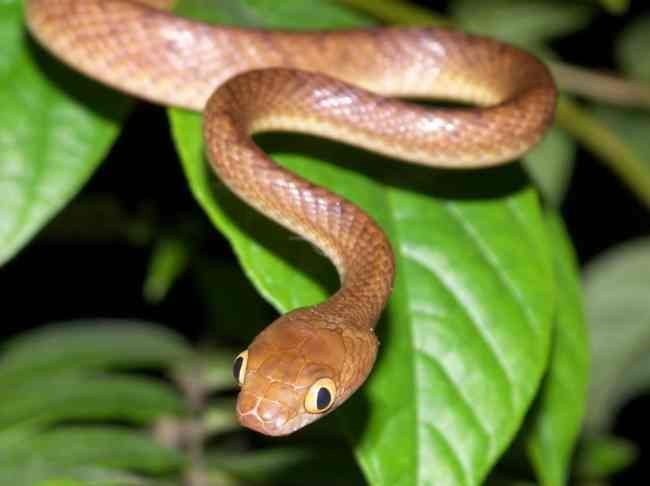 First Aid Treatment For Snake Bites